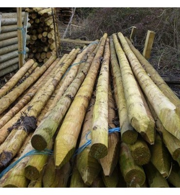 Treated Peeled and Pointed Pine Posts and Stakes